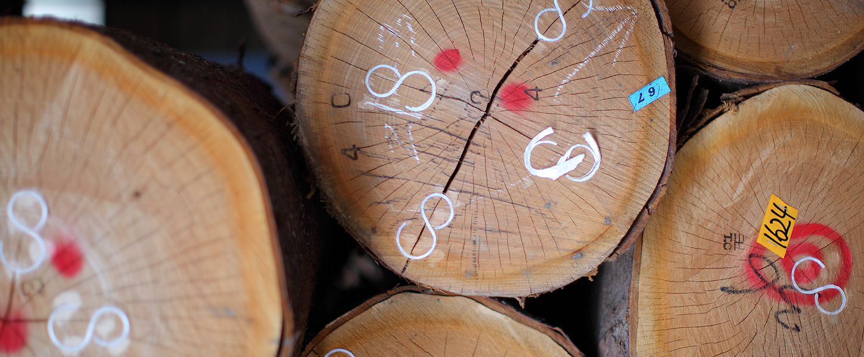 ヘッドライン-木の丸太